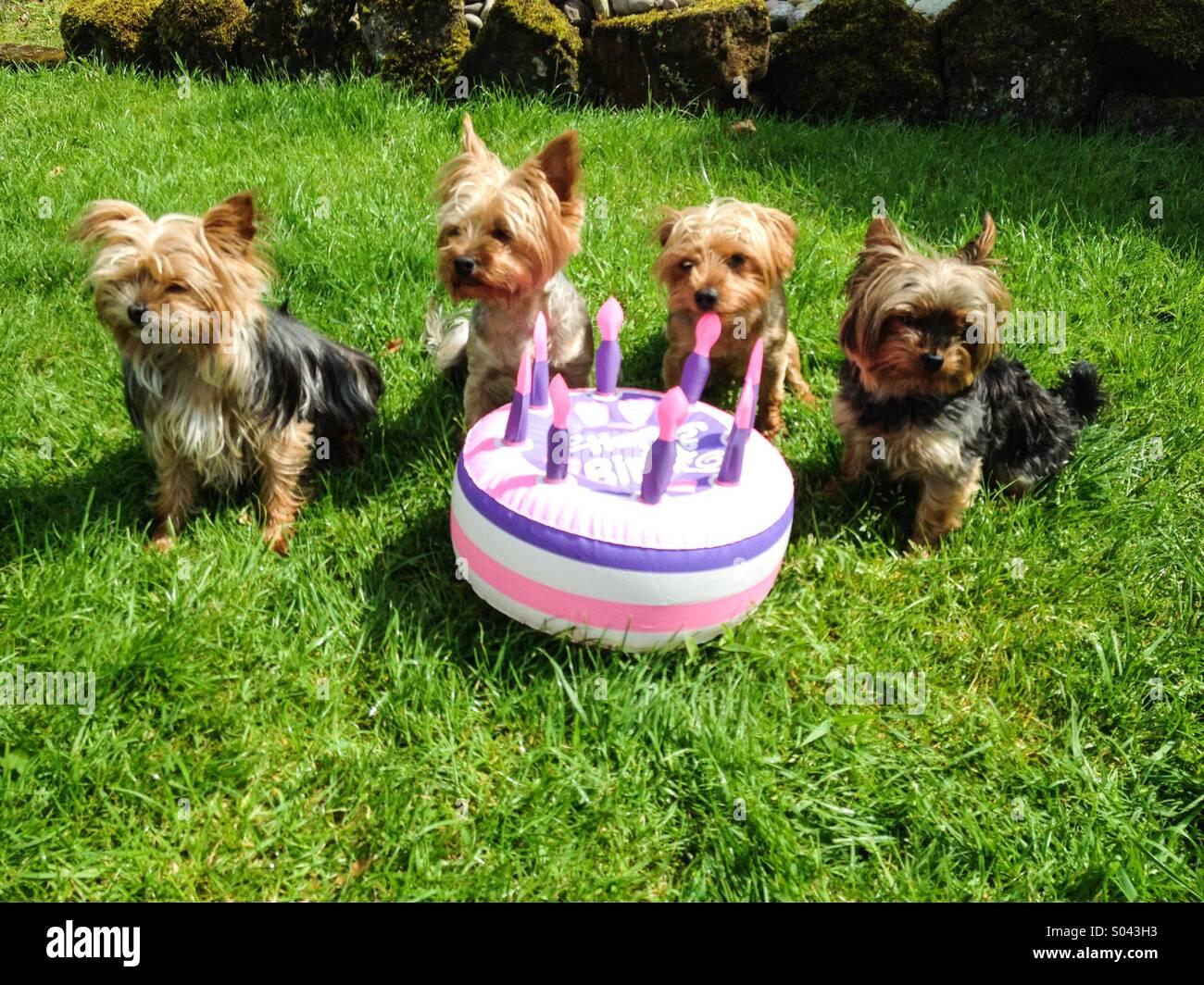 Man And Dog Birthday Cake