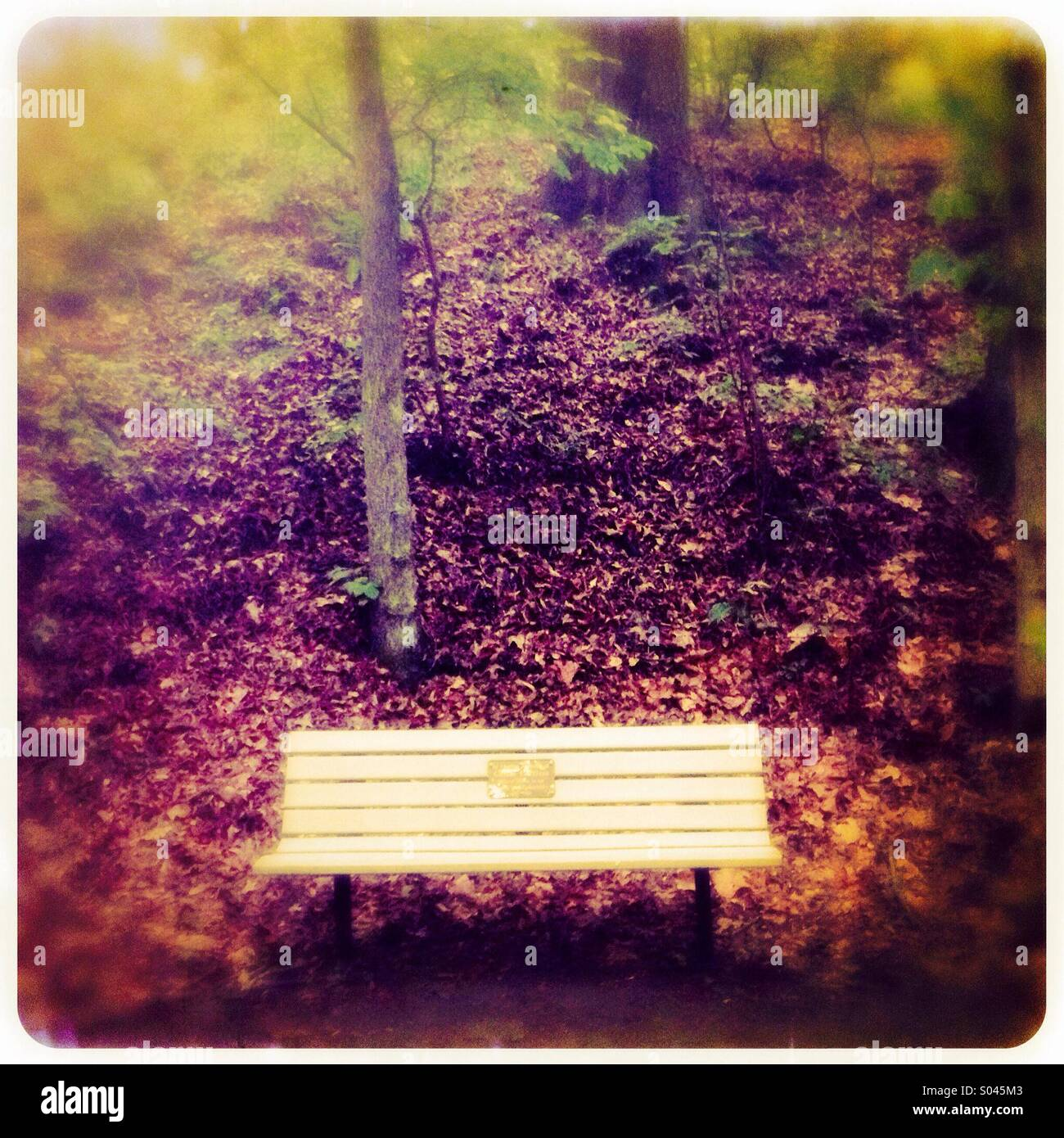 Lone bench - Stock Image