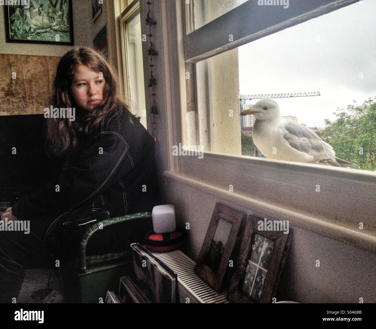Nosy seagull, teenage girl aged 15-16 years, sitting indoors, looking at seagull by window - Stock Image