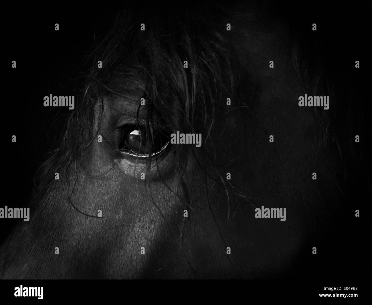 Intelligent eye of a horse - Stock Image