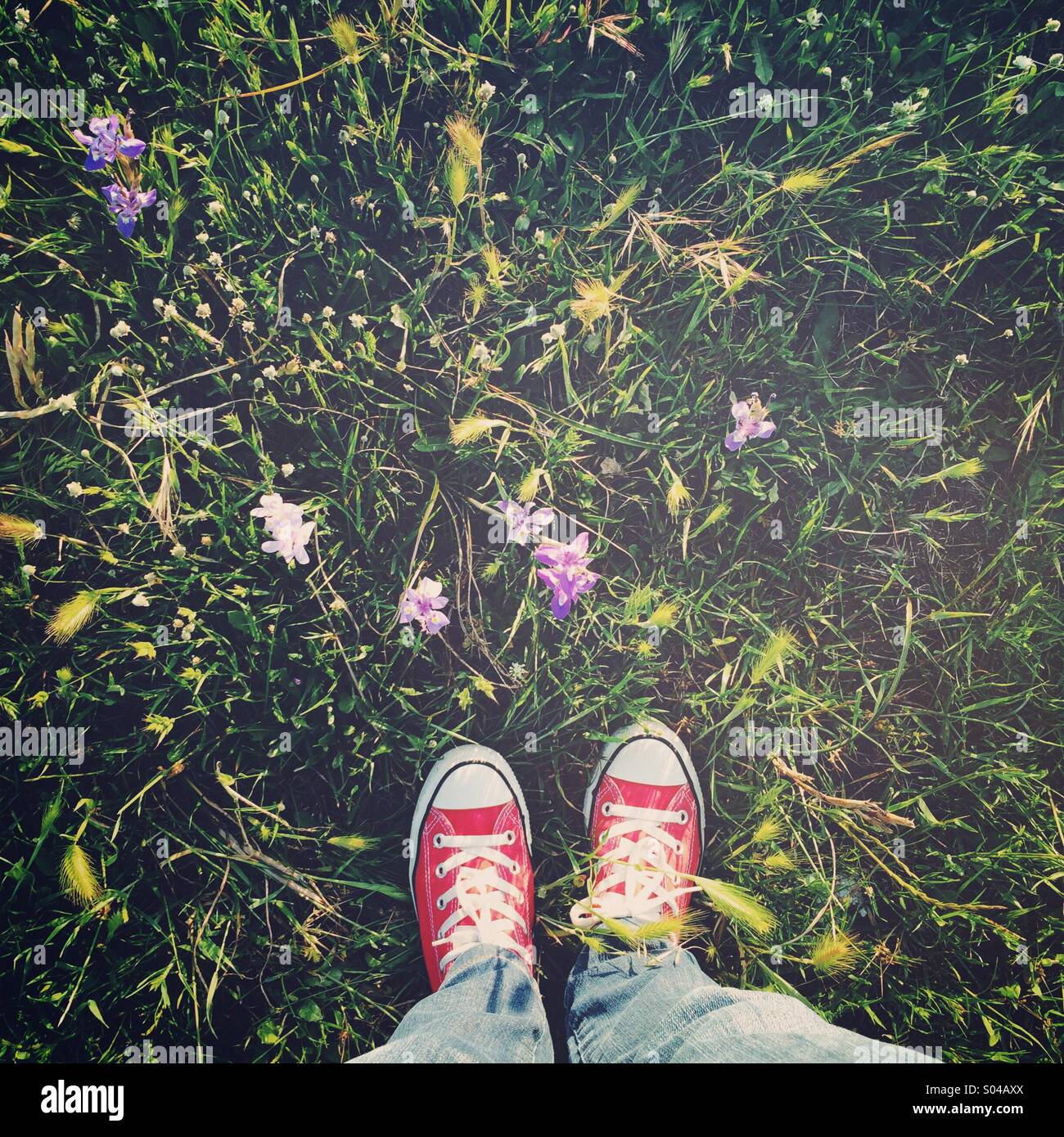 Spring at my feet - Stock Image