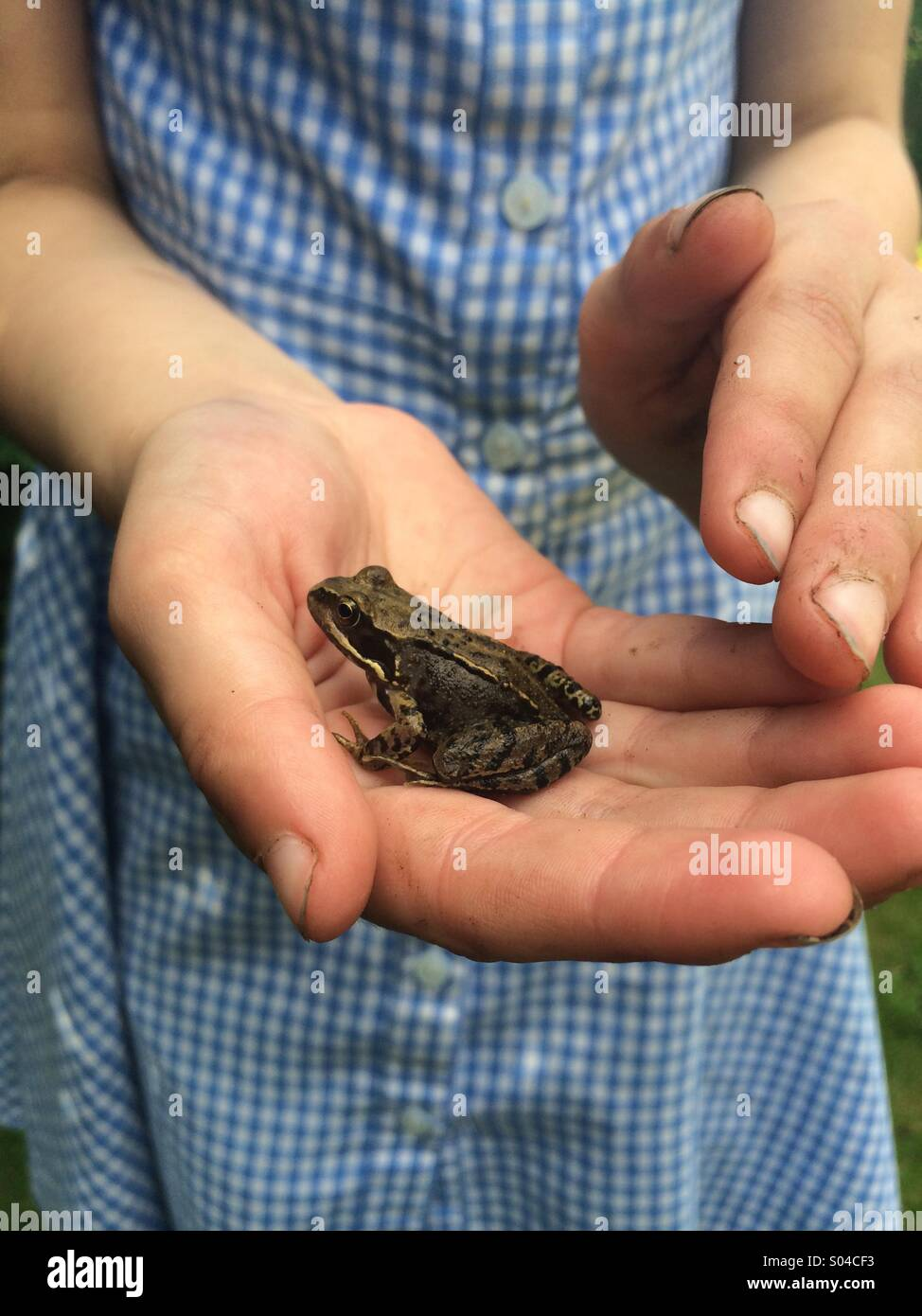 Small 6 year old girl holding a baby frog in her hand. - Stock Image