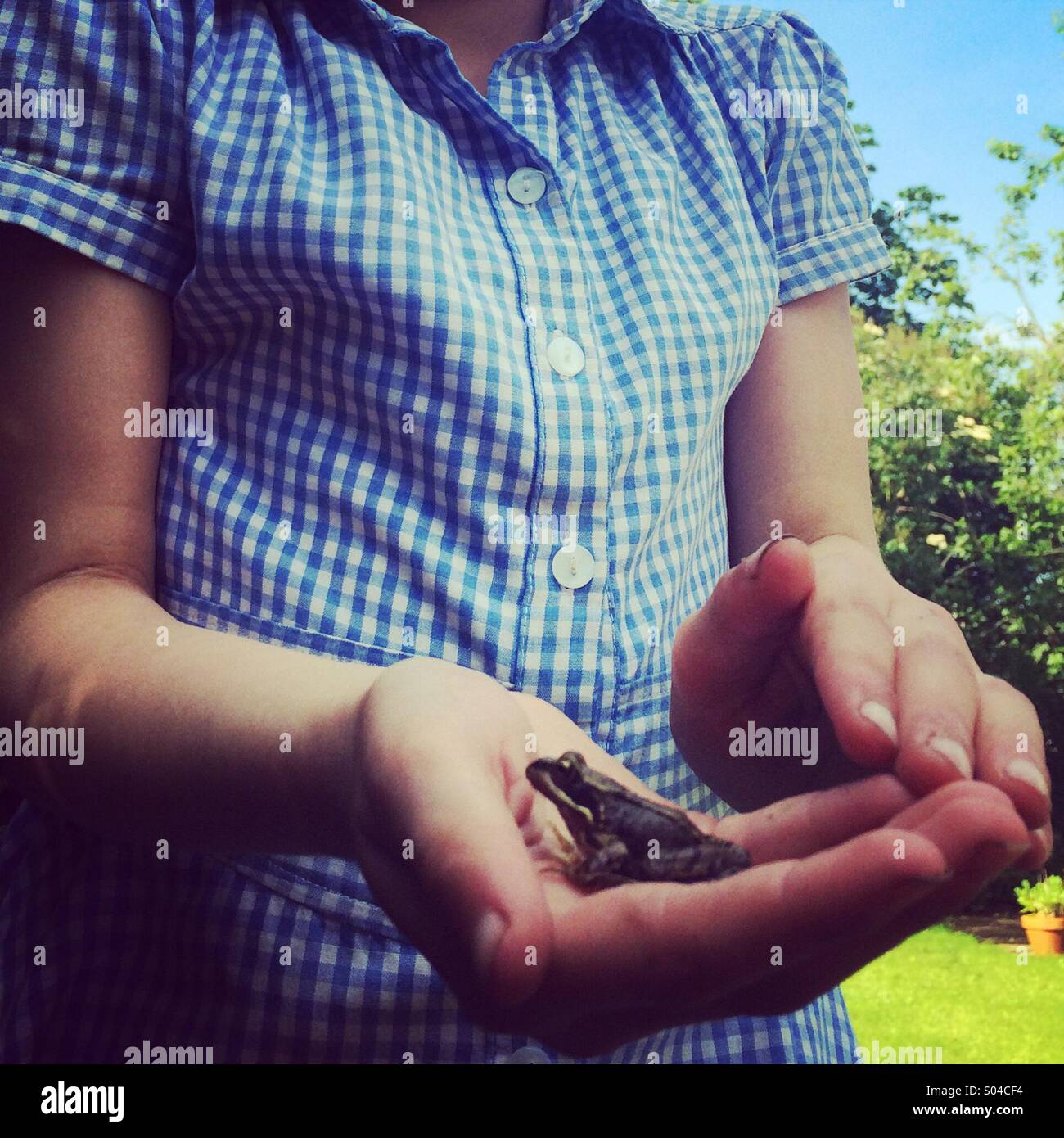 6 year old girl holding a baby frog. - Stock Image