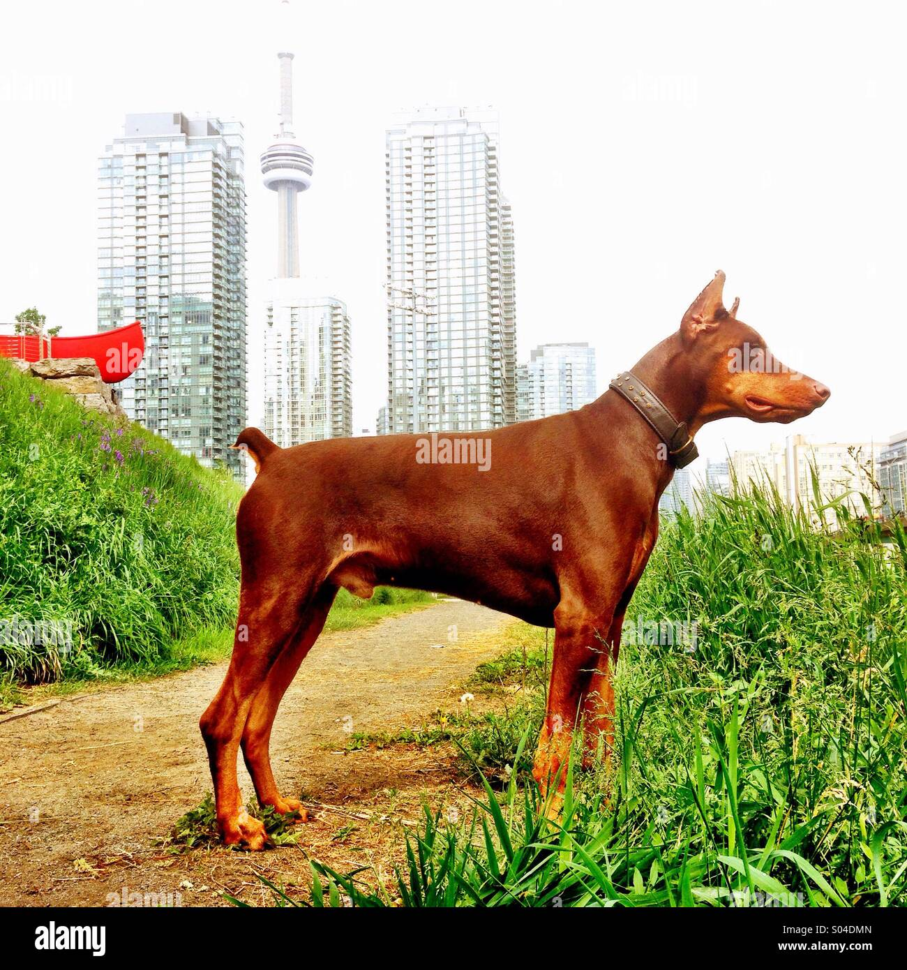 Dog on a hill - Stock Image