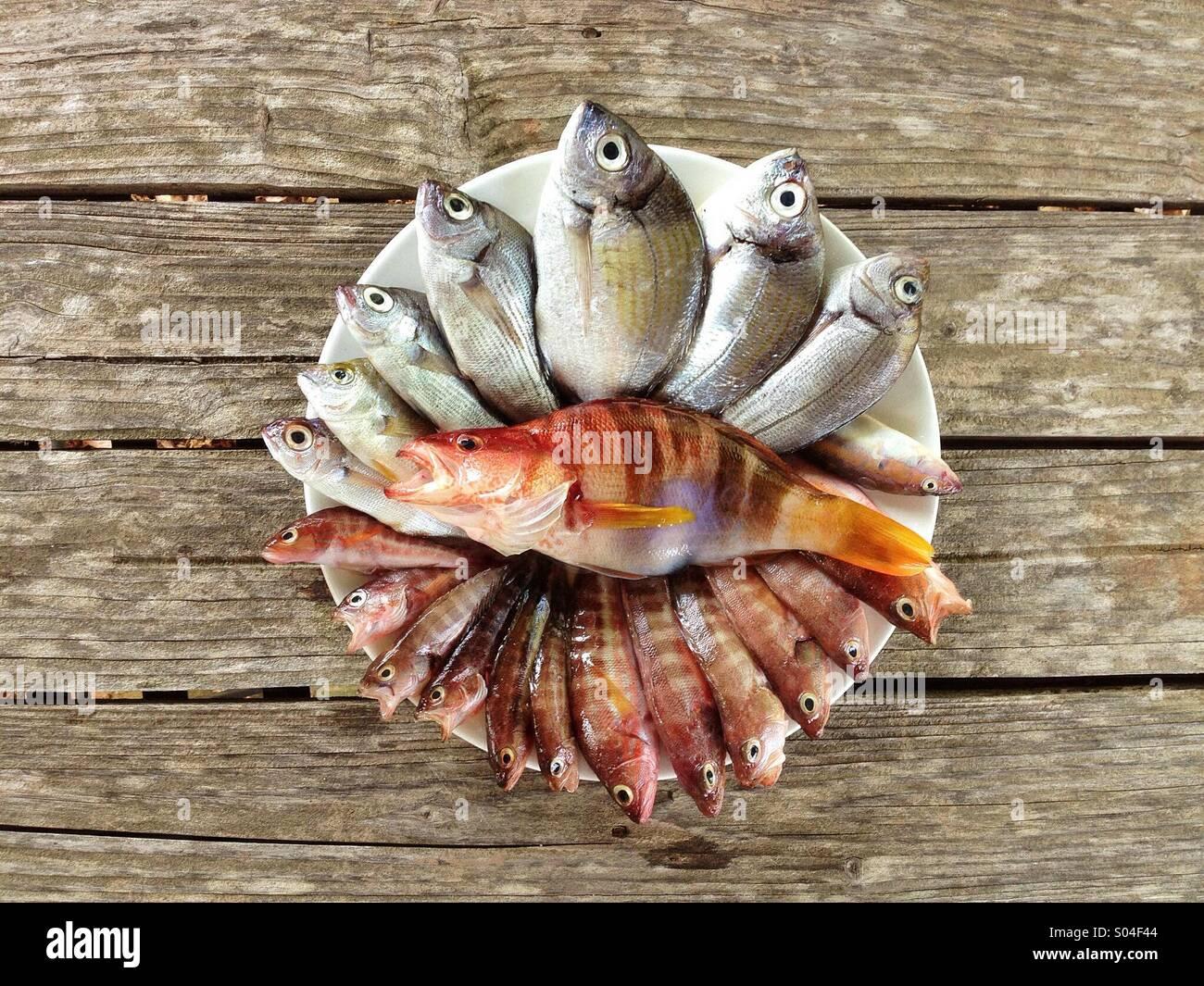 Today fishing - Stock Image