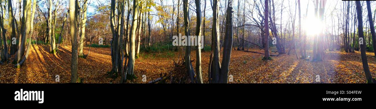 Morning sun in autumnal woodland. - Stock Image