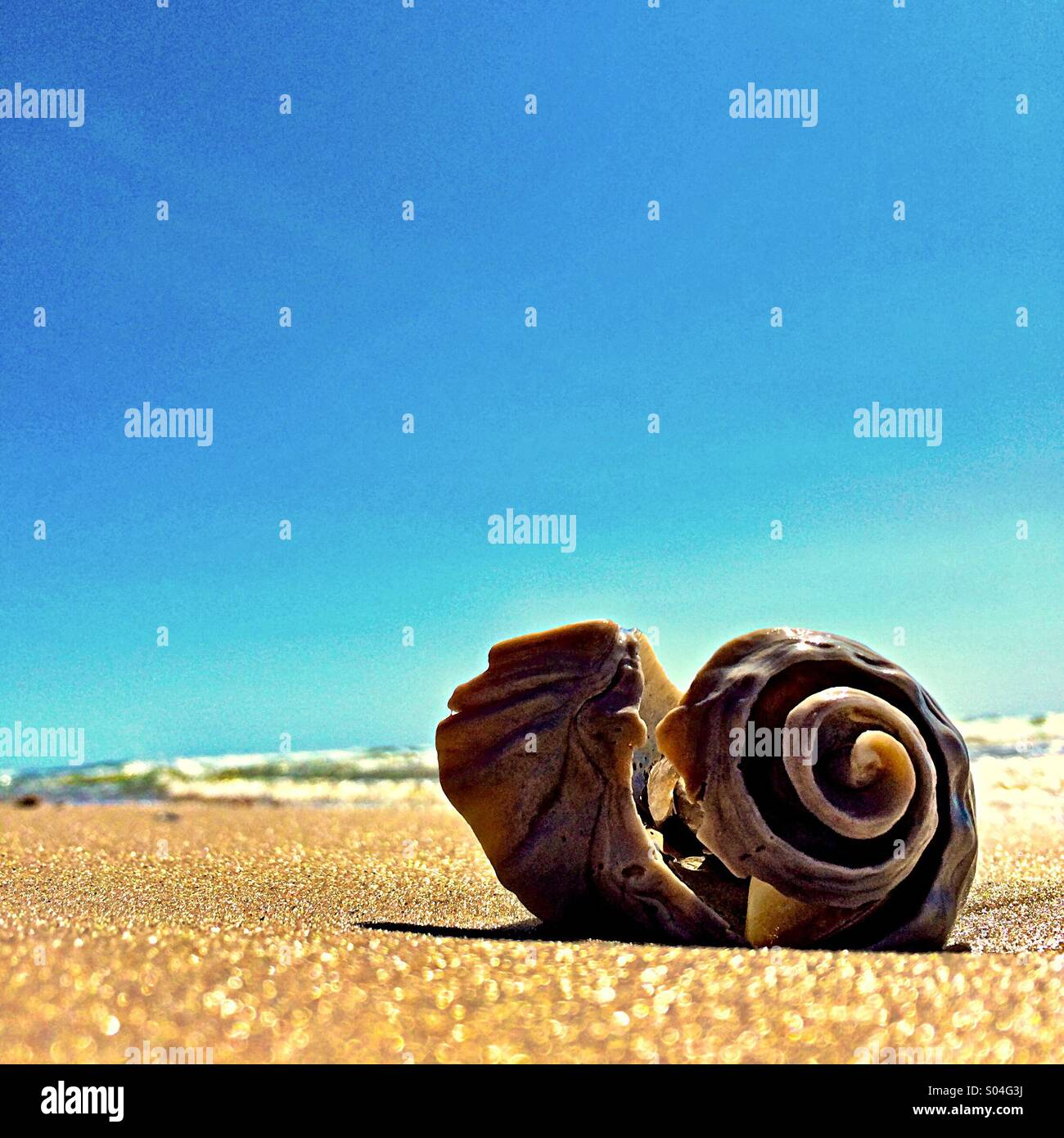 Lonely seashell - Stock Image