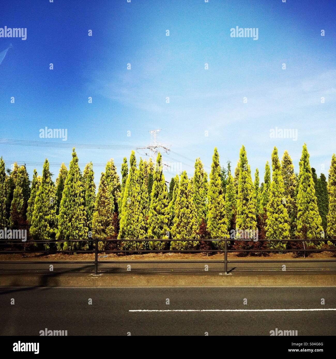 Trees alongside street in Ayase, Kanagawa prefecture, Japan. - Stock Image