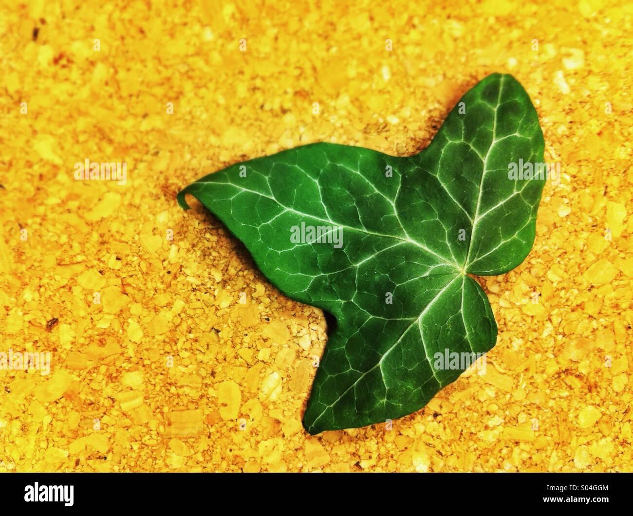 ivy leaf cork background - Stock Image