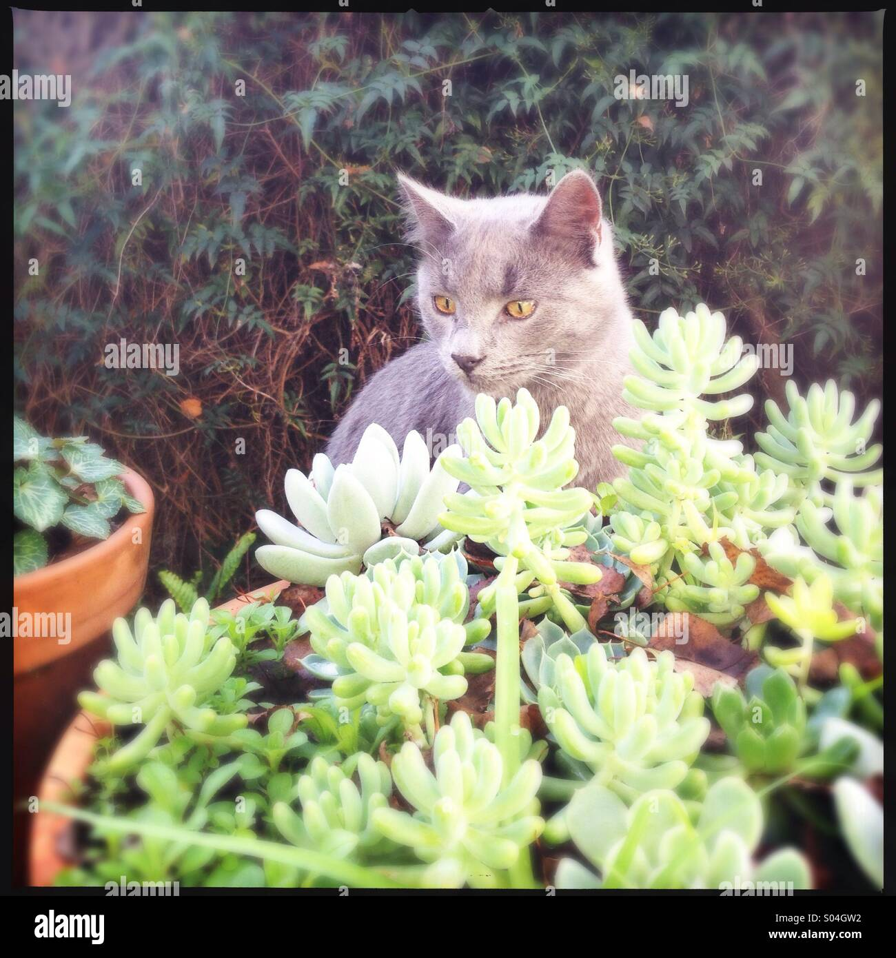 Cat among green bushes - Stock Image