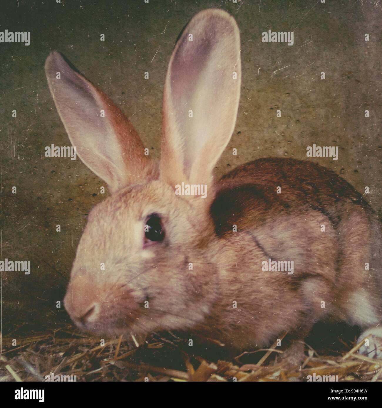 Young rabbit in cage - Stock Image