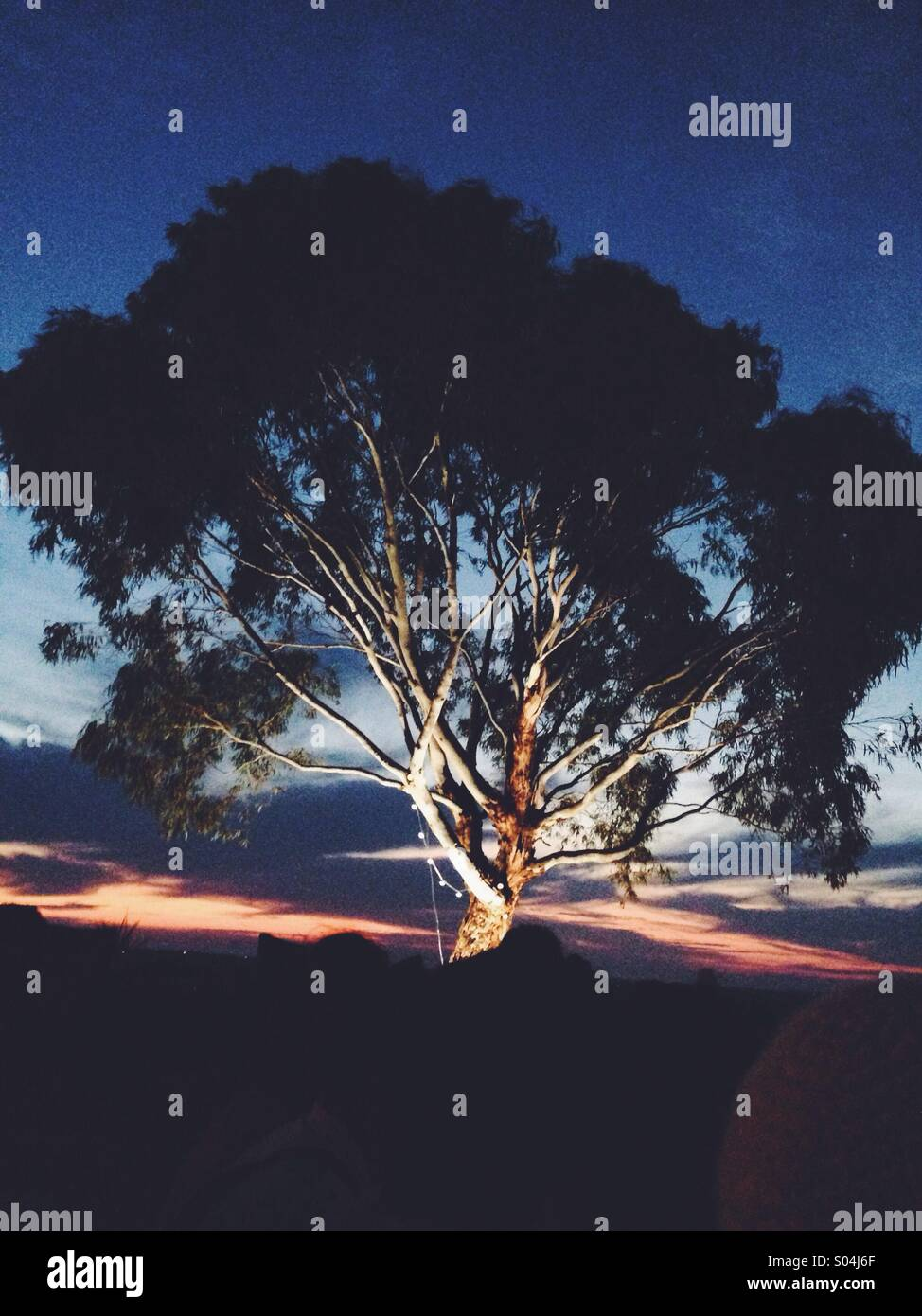 Feature tree - Stock Image