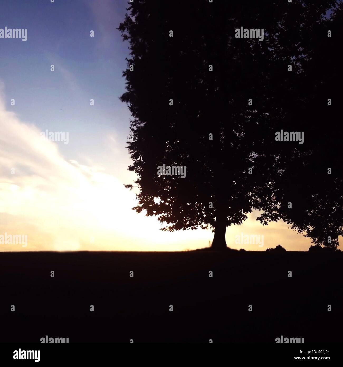 Evening Tree - Stock Image