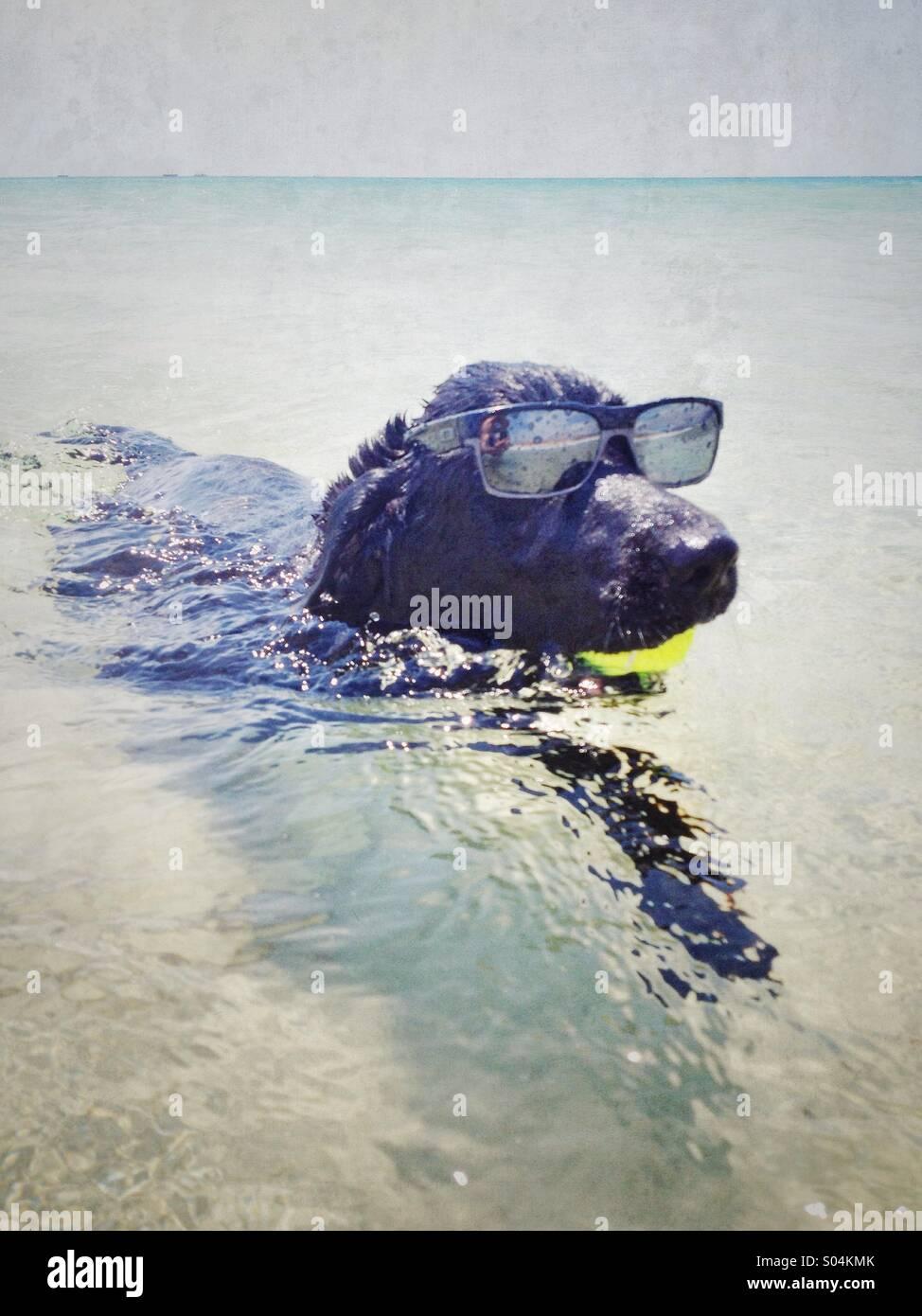 Funny dog. - Stock Image