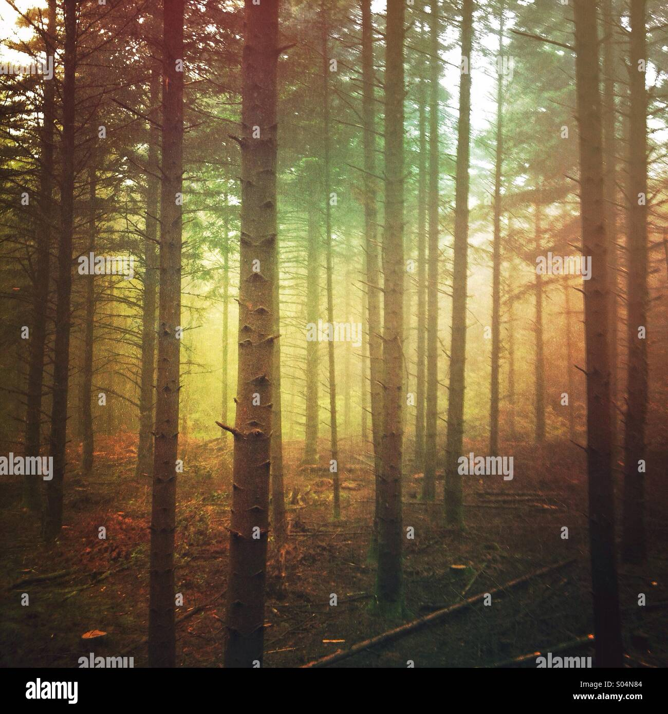 Moody dark forest on foggy day - Stock Image