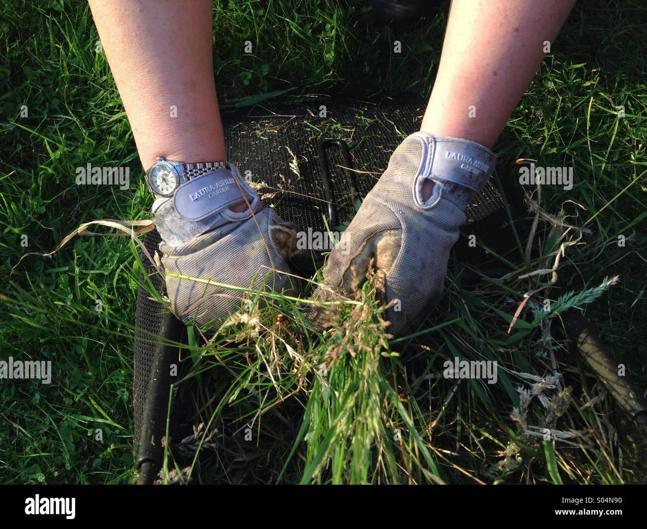 Posh Gardener - Stock Image