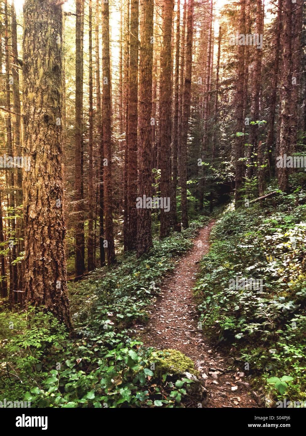 Excelsior Peak Trail, Whatcom County, WA - Stock Image