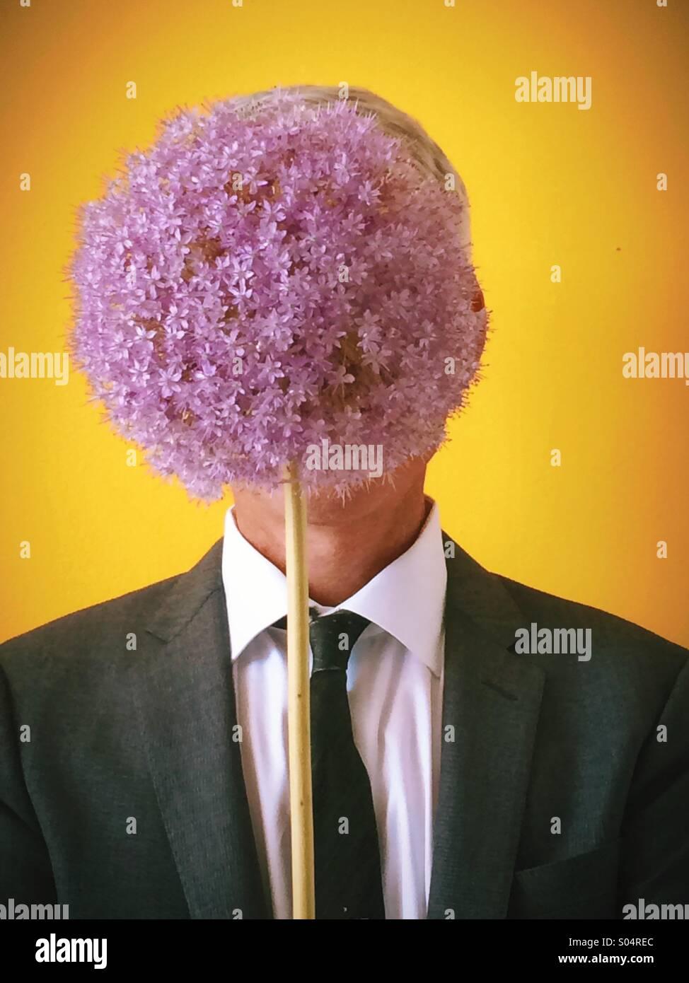 Alium flower hides mans face - Stock Image
