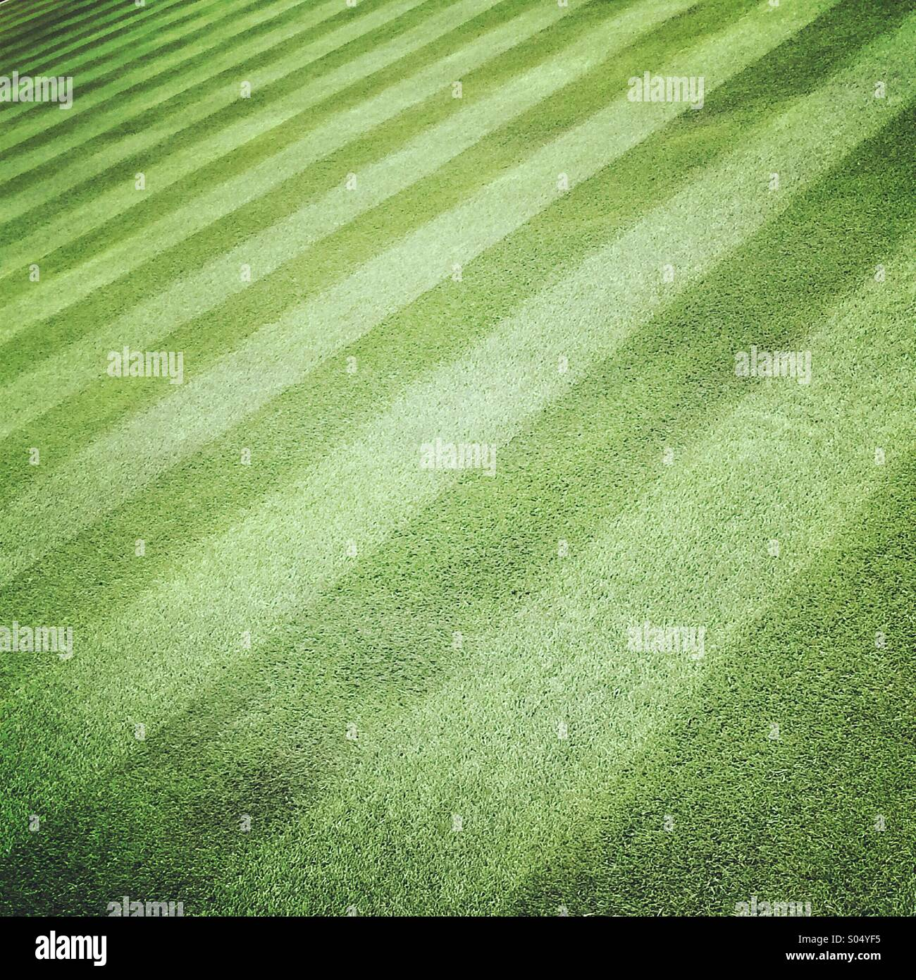 A perfect grass lawn - Stock Image