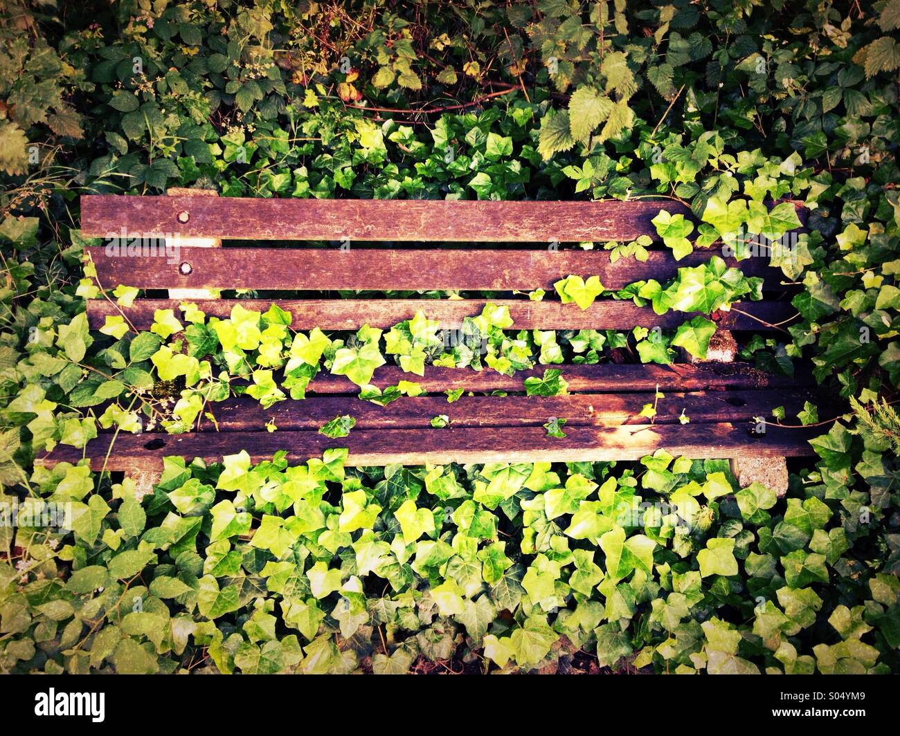 Overgrown bench - Stock Image