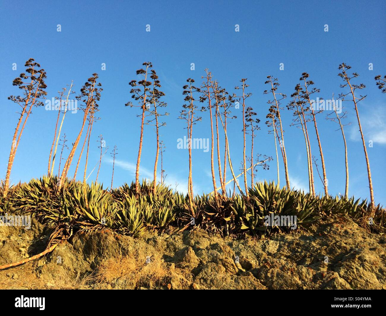 Reaching for the sky - Stock Image