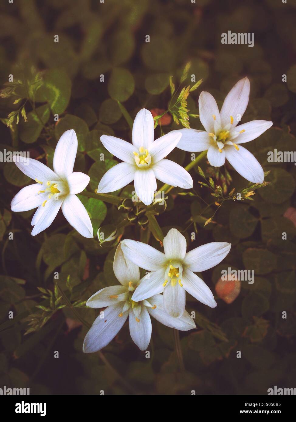 Tiny flowers - Stock Image