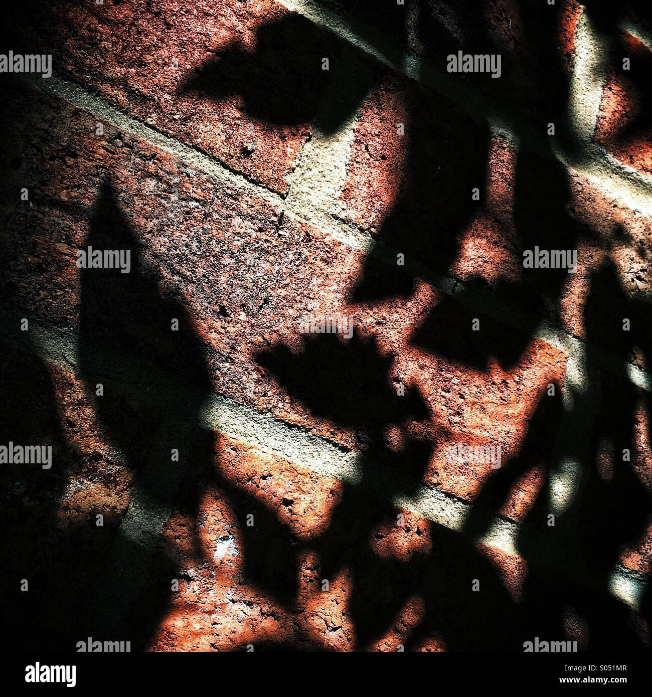 Shadow of leaves on brick wall - Stock Image