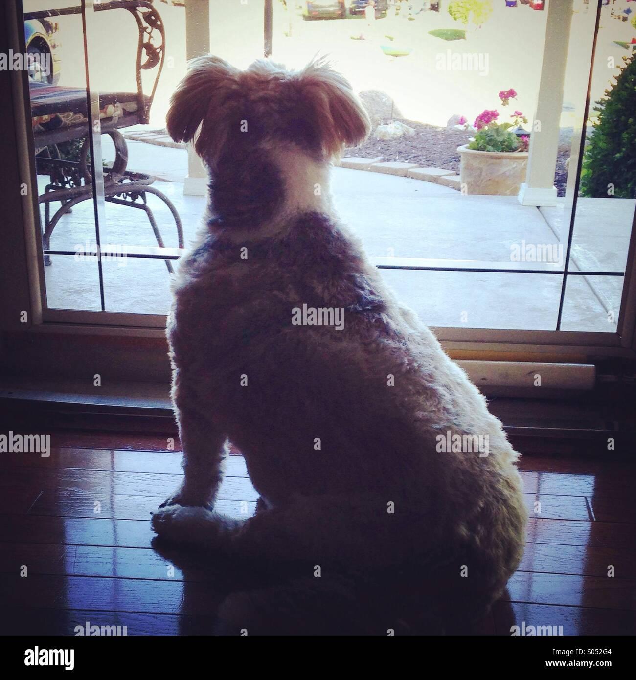 Dog longing to play outside. - Stock Image