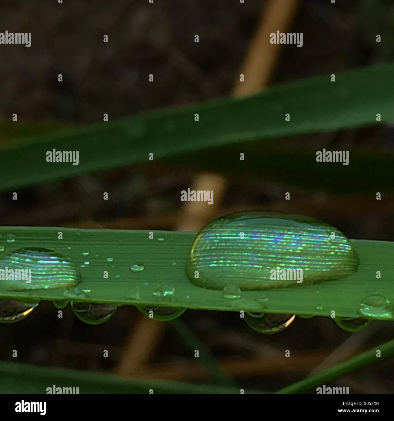 Dew drop sitting on a leaf - Stock Image