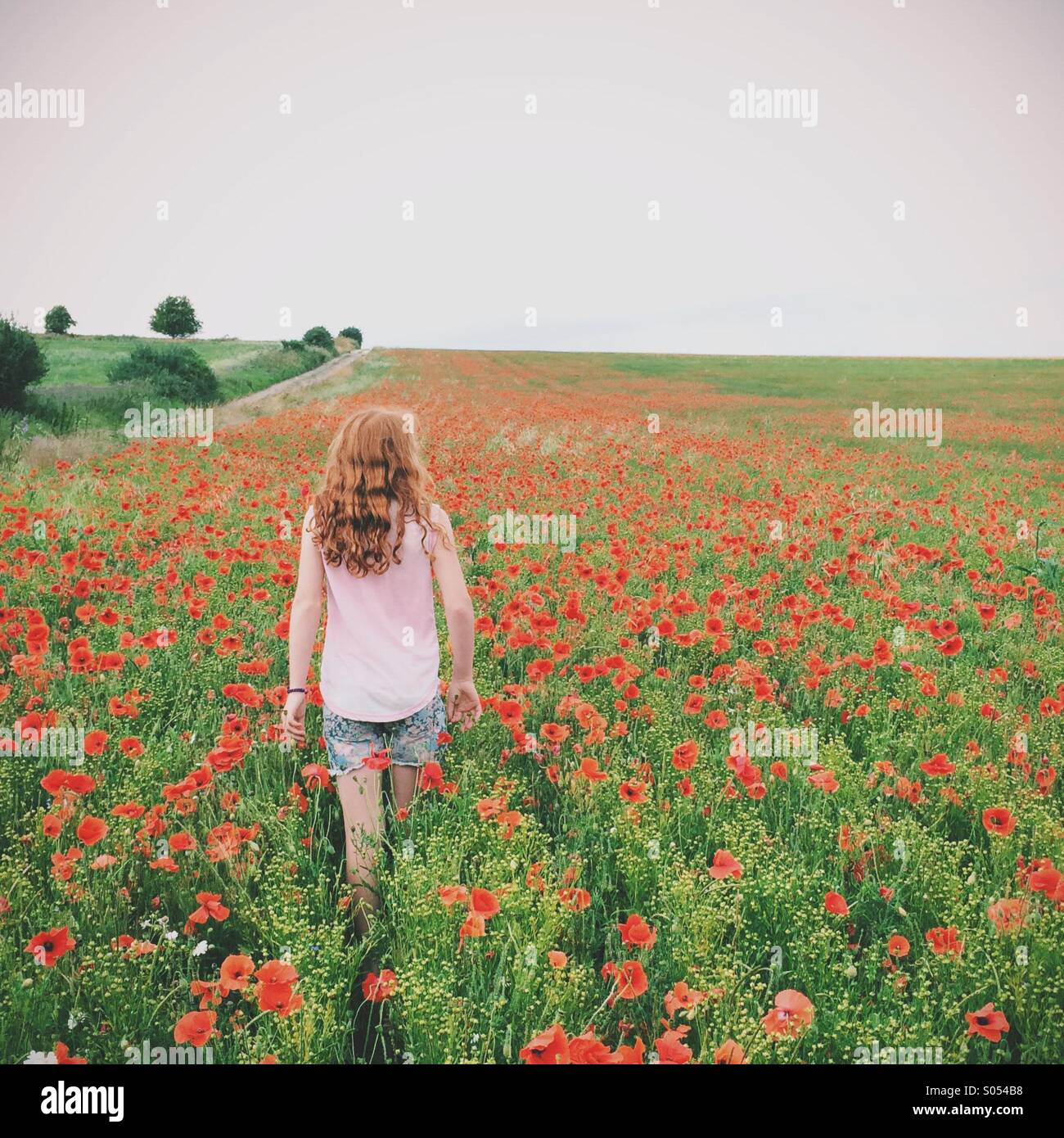 Rear view of girl with red hair walking in a poppy field Stock Photo