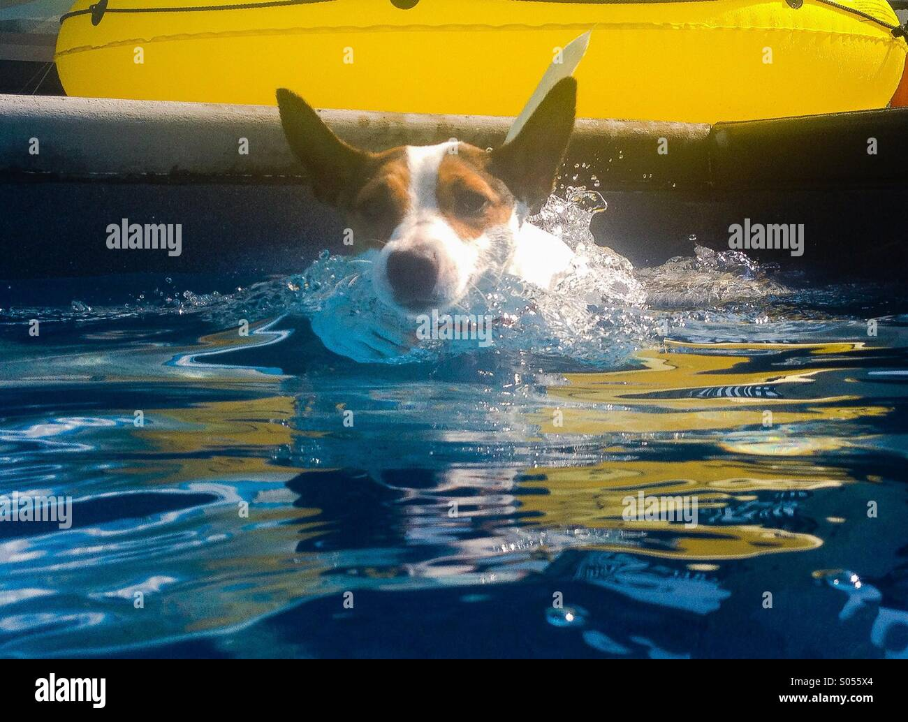 Terrier Making Stock Photos & Terrier Making Stock Images - Alamy