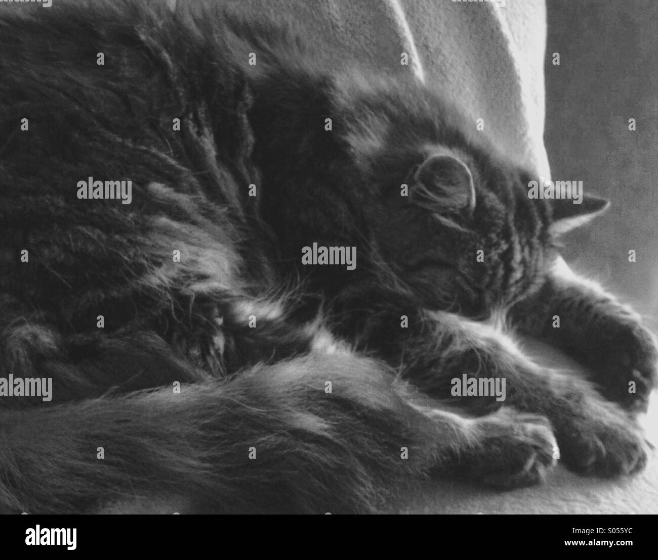 Dreamy picture of a sleeping cat Stock Photo