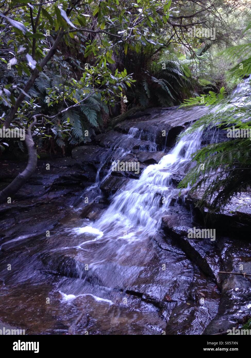 A fast flowing waterfall surrounded by nature at the Leura Cascades, New South Wales, Australia. - Stock Image
