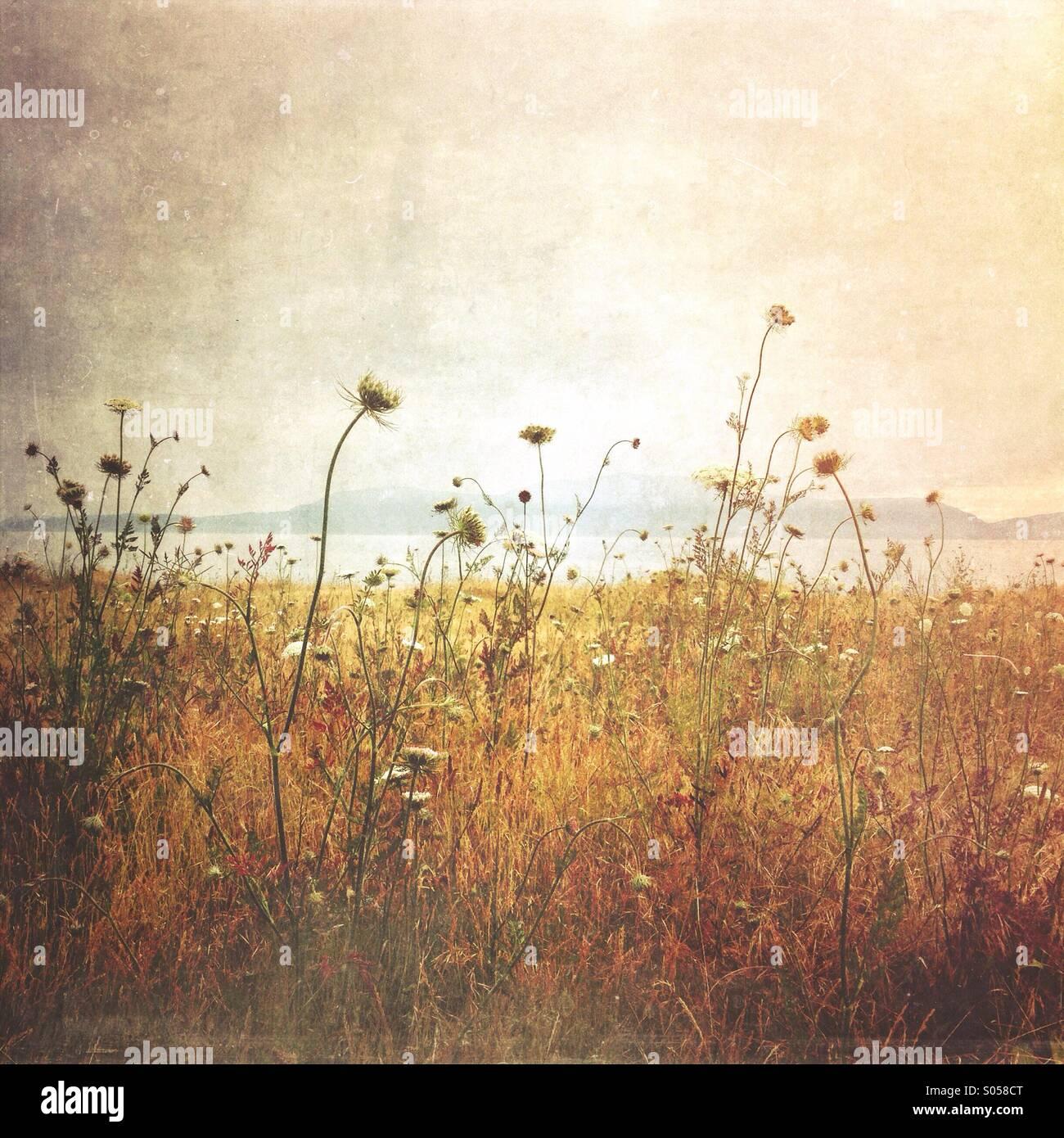 Pacific Northwest Wildflowers - Stock Image