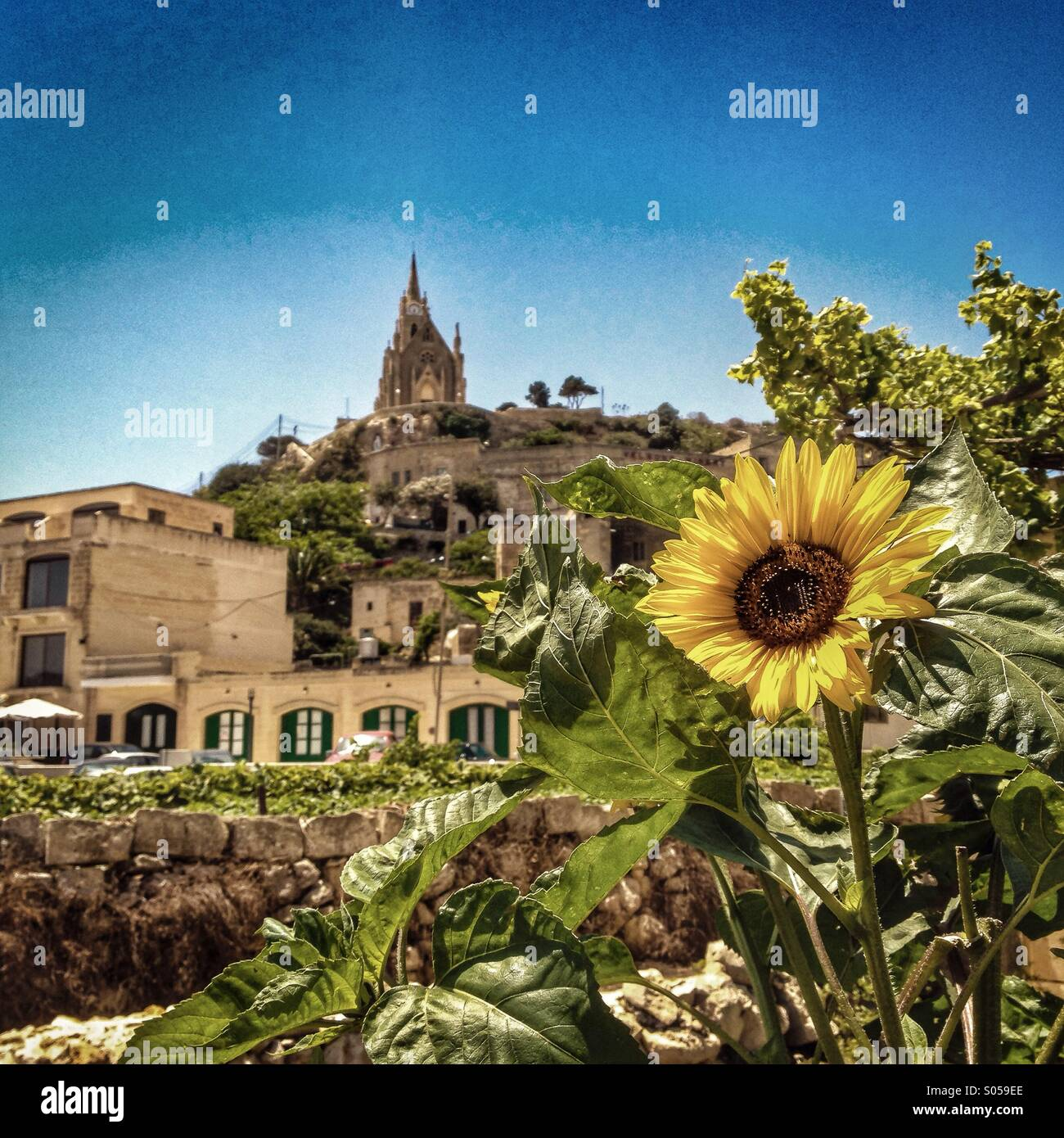 Sunflower in the harbour - Stock Image