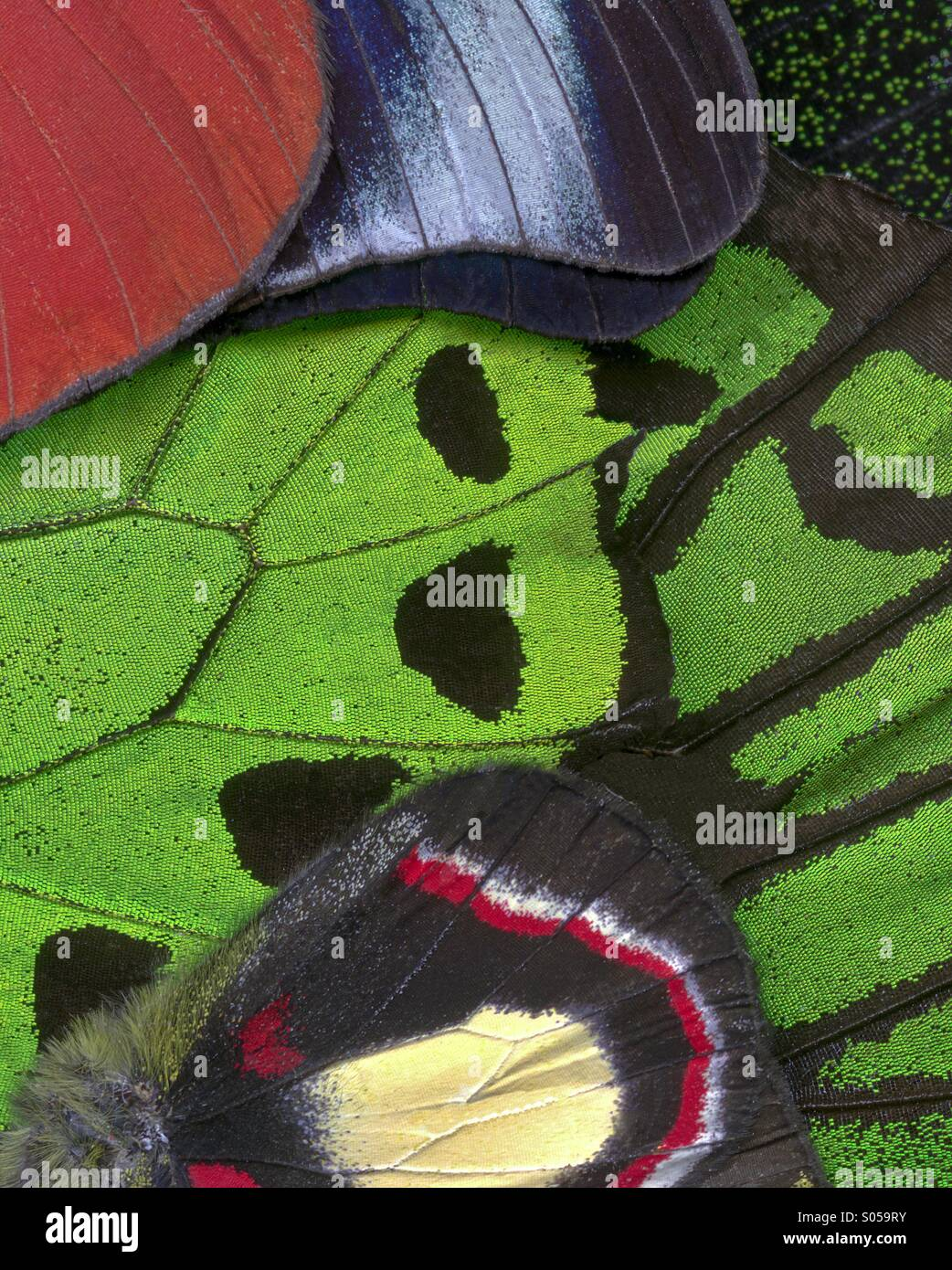 Moth Wings Abstration - Stock Image