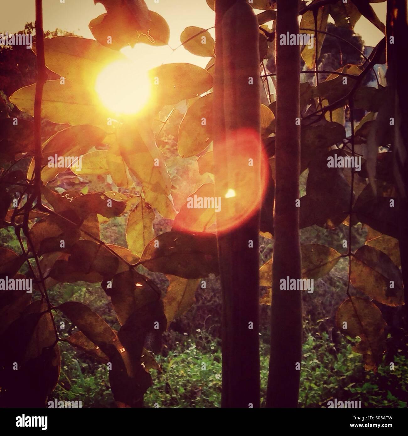 Autumn sunburst - Stock Image