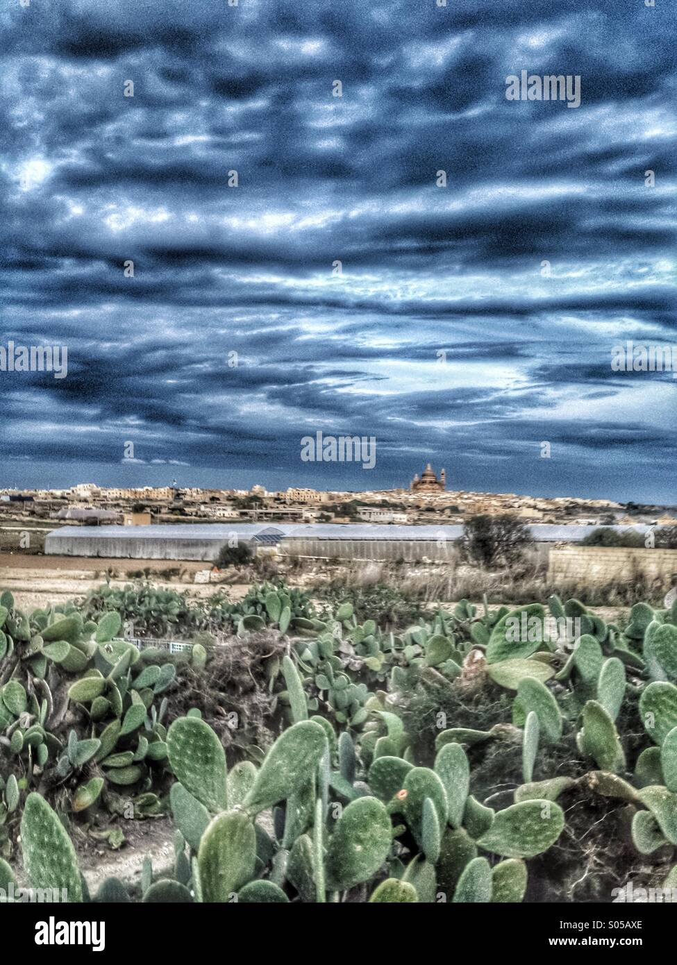 Wall of prickly pear and dramatic sky - Stock Image