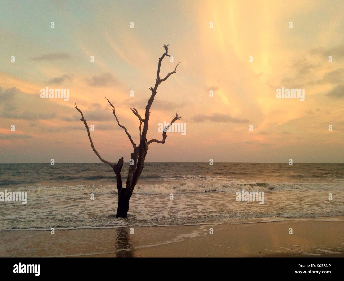 A solitary tree is washed by waves at Botany Bay Wildlife Management Area, SC. - Stock Image