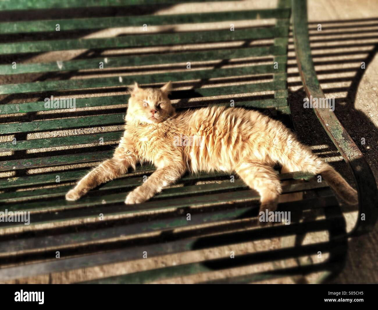 Feral cat basking in sun on public bench Stock Photo