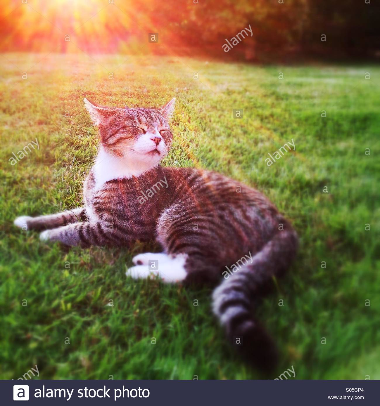 Cat basking in the sun - Stock Image