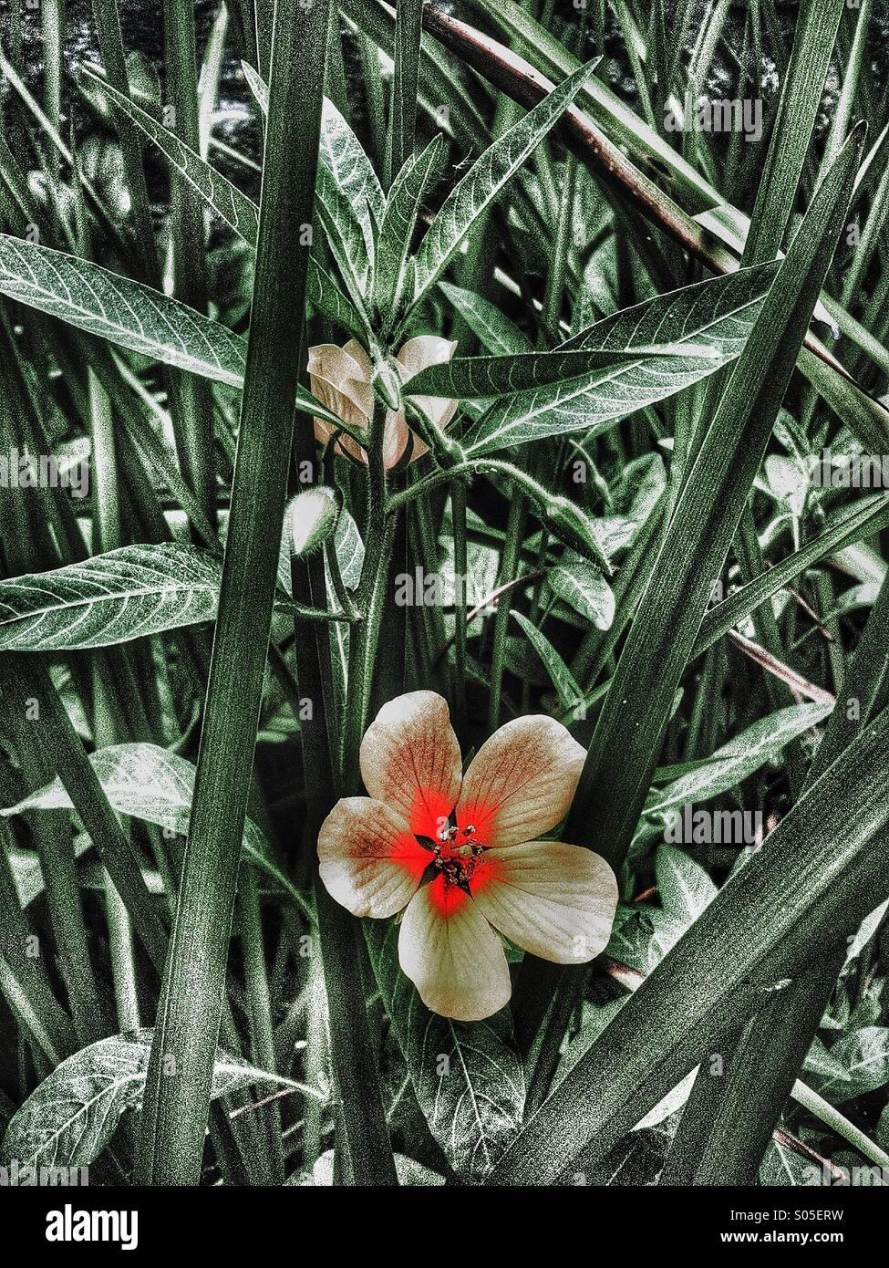 surreal flower in vegitation - Stock Image