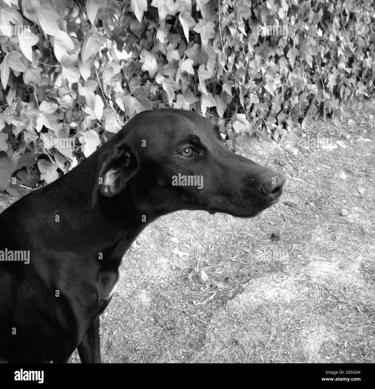 Small black dog - Stock Image