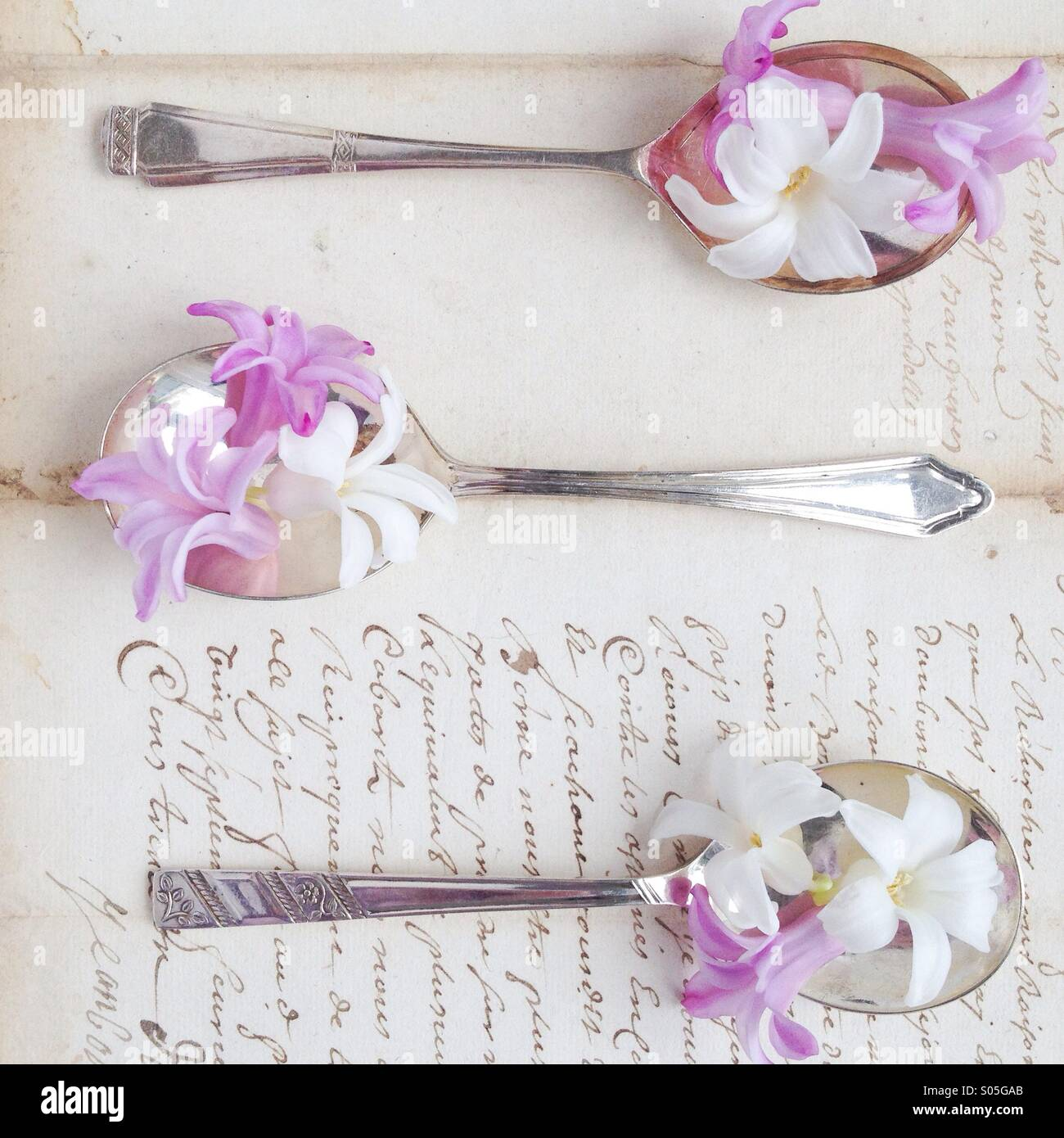 Hyacinths on vintage silver spoon and vintage letter - Stock Image