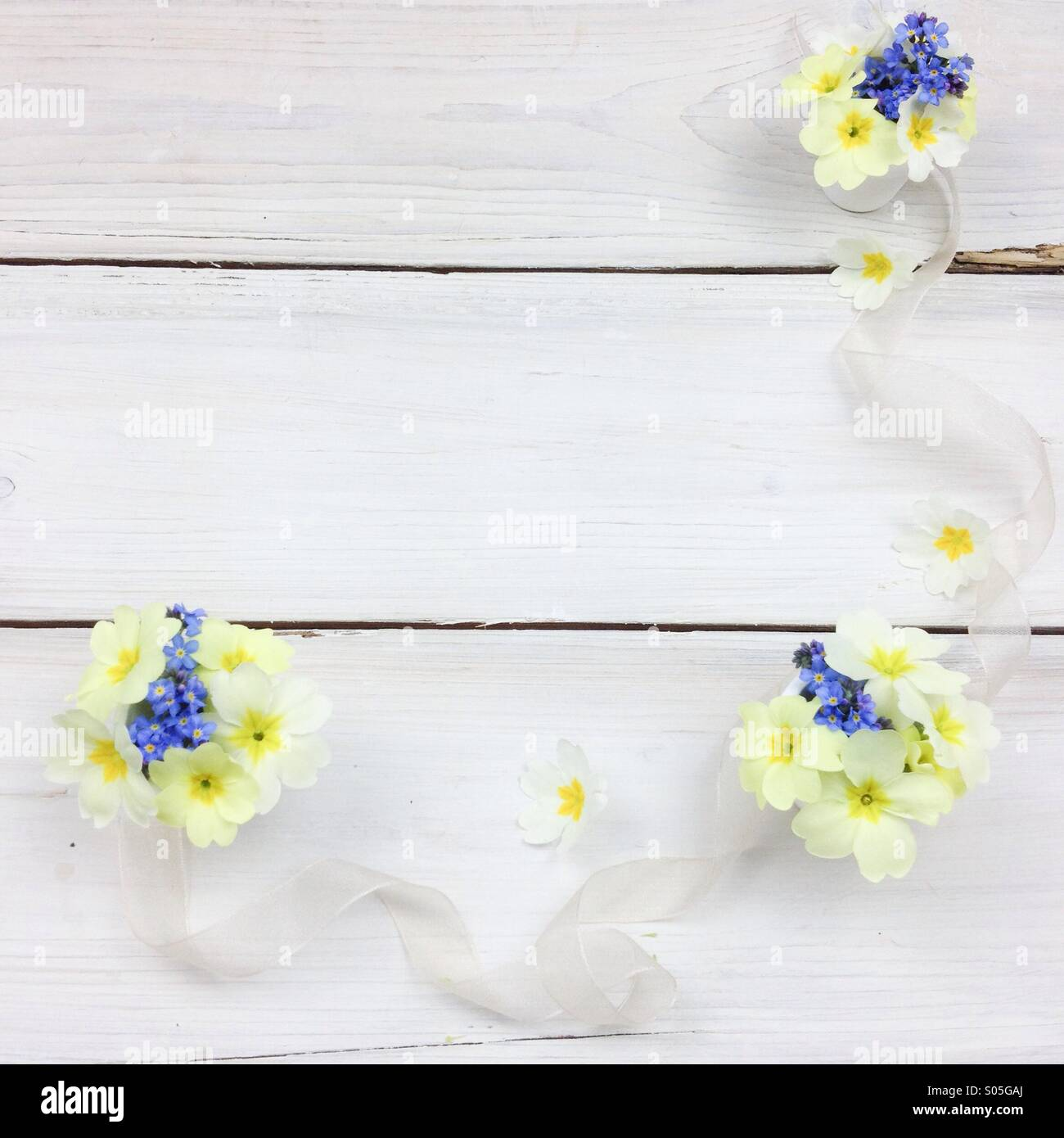 Spring fairy posies of primroses and forget-me-nots on white wooden board - Stock Image