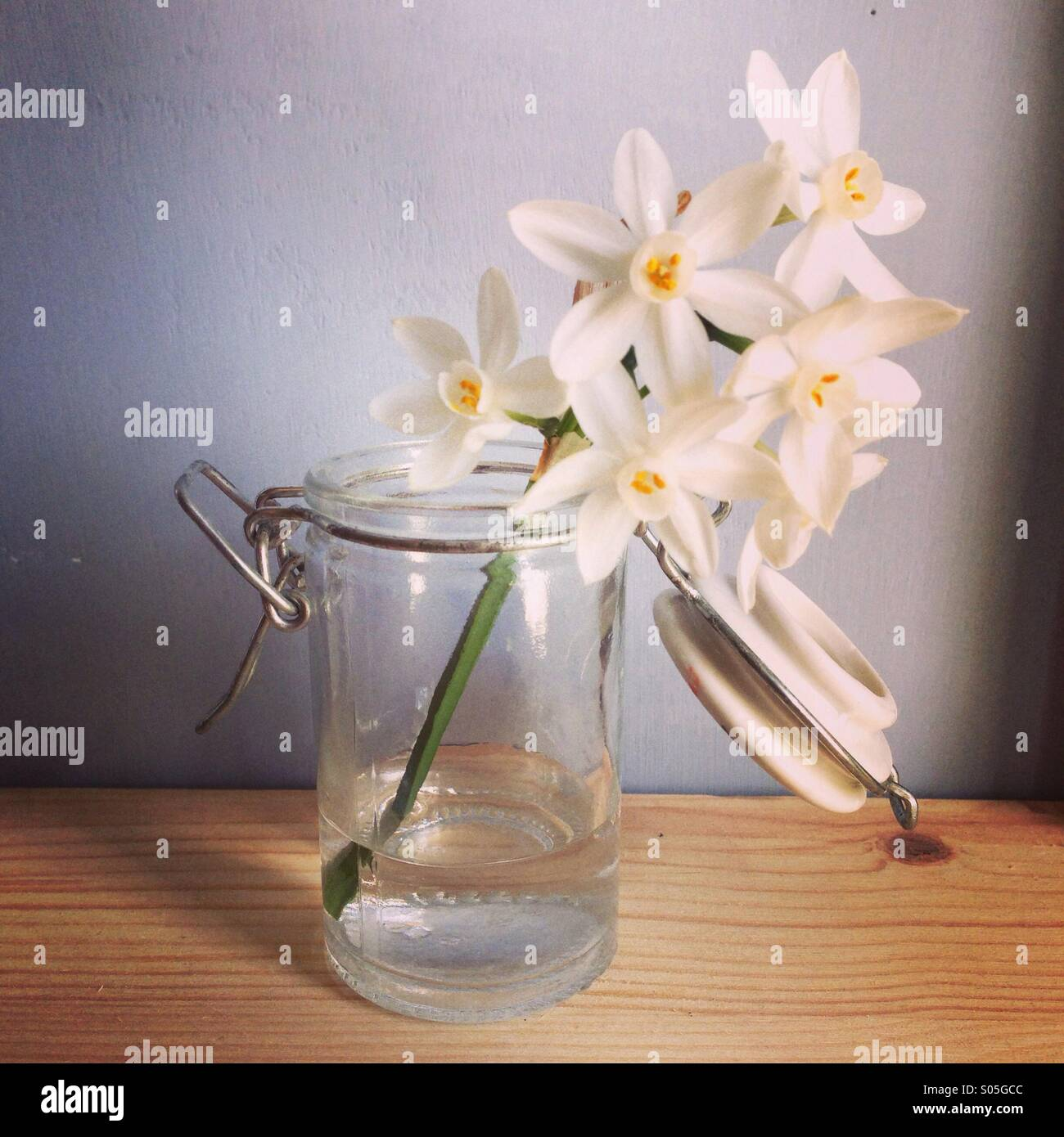 Little flower, amazing scent - Stock Image