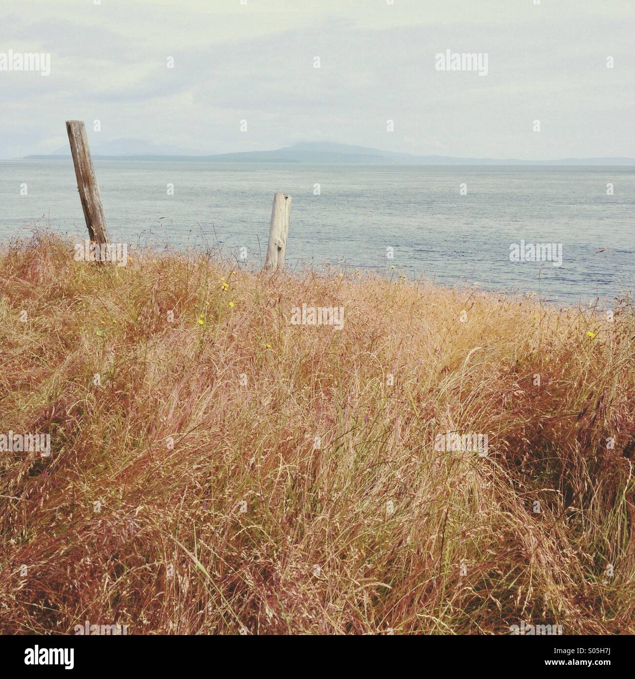 Minimalist landscape with grasses and posts overlooking ocean and islands. - Stock Image