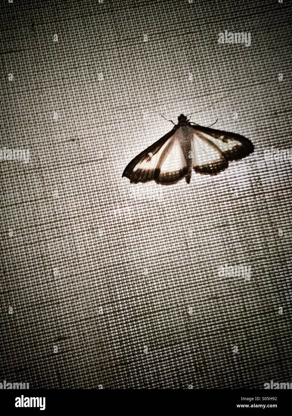 Butterfly on canvas - Stock Image