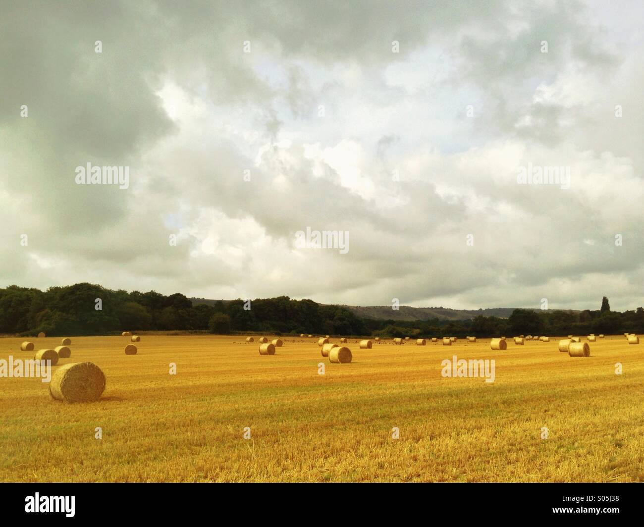 Make hay while the sun shines - a field full of bales of hay ready for collection. - Stock Image