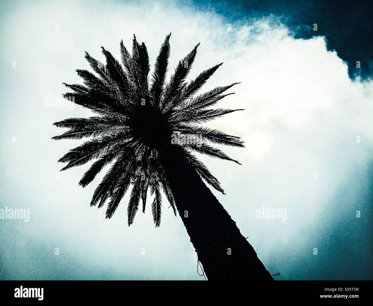 Palm tree silhouette from bellow - Stock Image